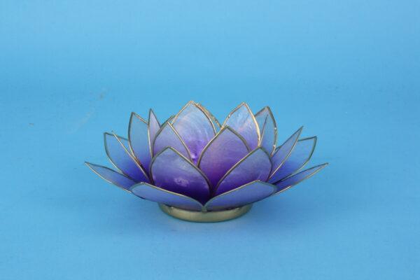 20161466 – Lotus violet goudrand klein
