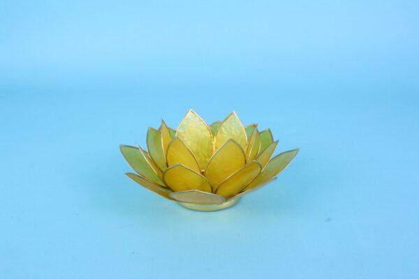 20161885 – Lotus geel met goudrand